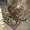 Станок листогибочный с поворотной балкой - Изображение #4, Объявление #1642398