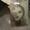 Станок листогибочный с поворотной балкой - Изображение #5, Объявление #1642398