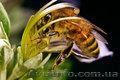 Продукция компании Тенториум в Харькове и Украине – высококачественный мед,  прод