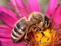 натуральная продукция Тенториум- продукция пчеловодства