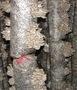 вешанка-мицелий.грибные блоки. свежие грибы