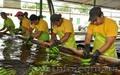 оптовые поставки бананов из эквадора, Объявление #461570