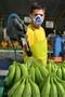 фрукты бананы оптом - Изображение #3, Объявление #461566