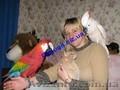 Элитные попугаи из питомника«Г.Р.А.Ф.»., Объявление #708802