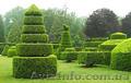 професиональный уход за садом - Изображение #3, Объявление #711892