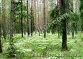Приватизированный участок 20 соток в природоохранной зоне., Объявление #745290