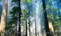 Приватизированный участок 20 соток в природоохранной зоне. - Изображение #3, Объявление #745290