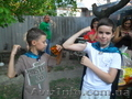 Детский праздник с феями. Харьков