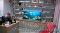 Тихий офис в центре с аквариумом