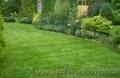 Создание газонов (посевных и рулонных) - Изображение #2, Объявление #924504