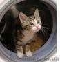 Ремонт стиральных машин автомат на дому у заказчика., Объявление #986026
