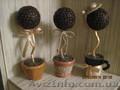 Продам деревья из зёрен кофе