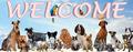 Одежда,  корм,  витамины для собак и кошек. Интернет-магазин «8 лап и 2 хвоста»