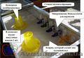 Выращивание цыплят в домашних условиях, брудер. - Изображение #3, Объявление #1391179