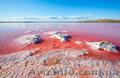 соль пищевая морская розовая,лечение морской солью простуды и гриппа - Изображение #2, Объявление #1388368