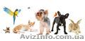 Ветеринар Харьков 0687459235 вызов на дом круглосуточно, Объявление #1480168