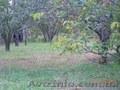 Садово-дачный участок (6+9 соток), Объявление #1484085
