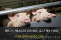 Установка видеонаблюдения для свиноферм, Объявление #1532715