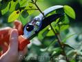 Услуги садовника. Комплексный уход за садом.  - Изображение #2, Объявление #1546159