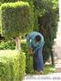 Услуги садовника. Комплексный уход за садом.  - Изображение #4, Объявление #1546159