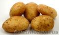 Куплю Картошку с НДС