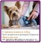 Профессиональная стрижка кошек и собак, Объявление #1558566