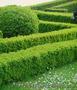 Продам саженцы Барбариса и много других растений (опт от 1000 грн) - Изображение #6, Объявление #1562550