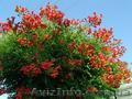Продам корни Кампсиса имного других растений (опт от 1000 грн)., Объявление #1562963