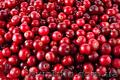 Продам саженцы Клюквы - Вашингтон и много других растений (опт от 1000 грн) - Изображение #2, Объявление #1562980