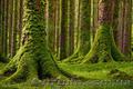 Продаем мох для озеленения притененных участков и много других растений - Изображение #3, Объявление #1564243
