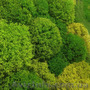 Продаем мох для озеленения притененных участков и много других растений - Изображение #4, Объявление #1564243