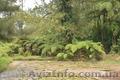 Продам Папоротник (Древовидный) и много других растений (опт от 1000 грн) - Изображение #5, Объявление #1564297
