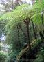 Продам Папоротник (Древовидный) и много других растений (опт от 1000 грн) - Изображение #7, Объявление #1564297