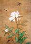 Продам саженцы Пиона и много других растений (опт от 1000 грн). , Объявление #1564310