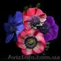 Продам саженцы Ветреницы и много других растений (опт от 1000 грн) - Изображение #6, Объявление #1562572