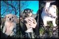 Щенки от мелкой дворовой собачки, Объявление #1601759