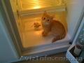 Ремонт холодильников на дому у заказчика по Харькову., Объявление #1606050