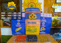 Семена подсолнечника / Рекольд - насіння соняшника - Изображение #4, Объявление #1588893