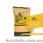 Семена подсолнечника / Насіння соняшника Форвард - Изображение #4, Объявление #1588895