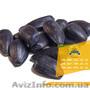 Якісне насіння соняшника від виробника - Изображение #4, Объявление #1588142