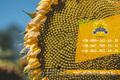 Семена подсолнечника / Насіння соняшника Базальт, Объявление #1588881