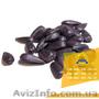 Семена подсолнечника / Насіння соняшника Гусляр - Изображение #2, Объявление #1588883