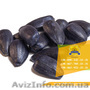 Семена подсолнечника / Насіння соняшника Златсон, Объявление #1588884
