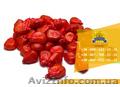 Семена кукурузы / Насіння кукурудзи Оржиця 237 МВ від ПБФ «Колос» - Изображение #4, Объявление #1588894