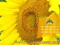 Семена подсолнечника / Насіння соняшника Базальт - Изображение #4, Объявление #1588881