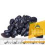 Семена подсолнечника / Насіння соняшника Форвард - Изображение #2, Объявление #1588895