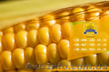 Семена кукурузы / Насіння кукурудзи Оржиця 237 МВ від ПБФ «Колос» - Изображение #5, Объявление #1588894