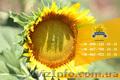Семена подсолнечника / Насіння соняшника Форвард - Изображение #3, Объявление #1588895