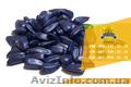 Семена подсолнечника Ясон / Насіння соняшника - Изображение #2, Объявление #1601195