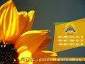 Семена подсолнечника / Рекольд - насіння соняшника, Объявление #1588893